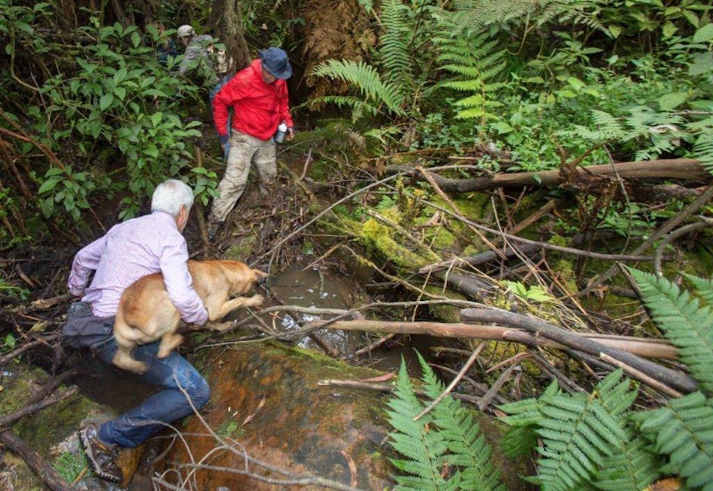 Colombia: El alcalde de Bogotá estuvo perdido una zona boscosa de durante varias horas https://t.co/Ahyt2lfae1 https://t.co/oG9GQK3Crh