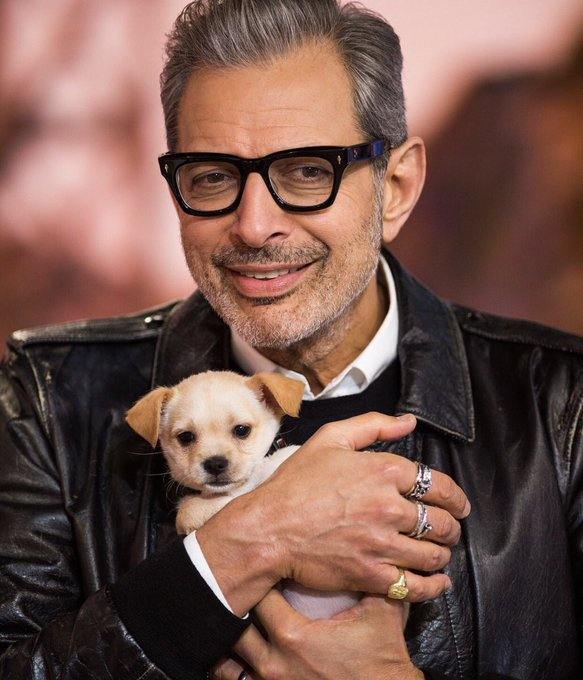Happy birthday to this pure soul!!!!!!! Nothing better than some wholesome Jeff Goldblum content!