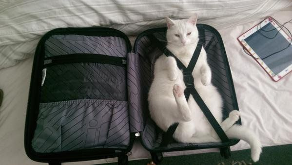 only packing the essentials 😻 📷 @SpaceCatPics #TRAVELTuesday #Nomad #Backpacker #LifeHacks #ART #MEME #VIRAL #BIZBoost 🚀