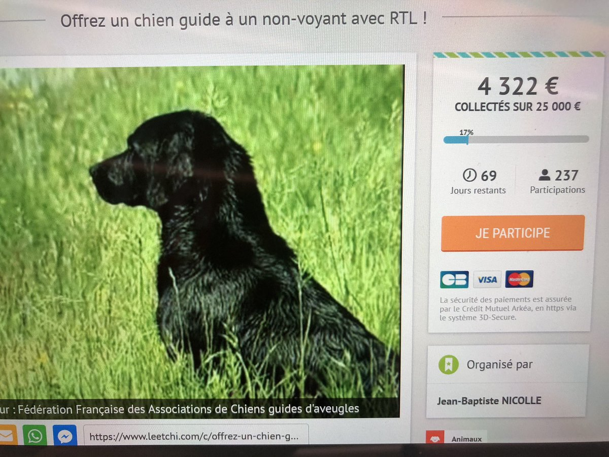 Dating pour chien