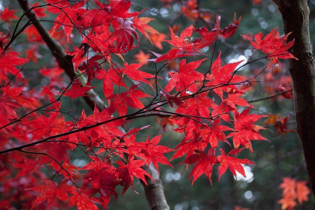 8 of the Best Trees for #Fall Leaves https://t.co/zCn41GrjLp #Autumn #Trees