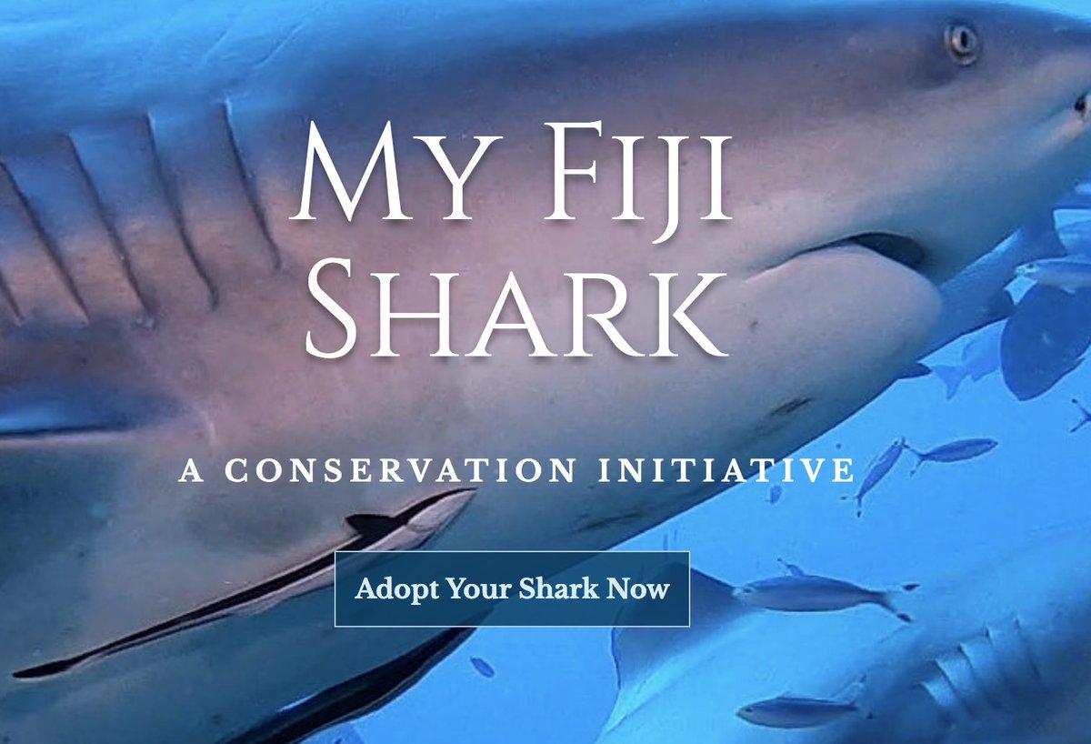 Shark Education on Twitter: