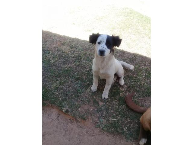Lost Dogs registry of SA on Twitter: