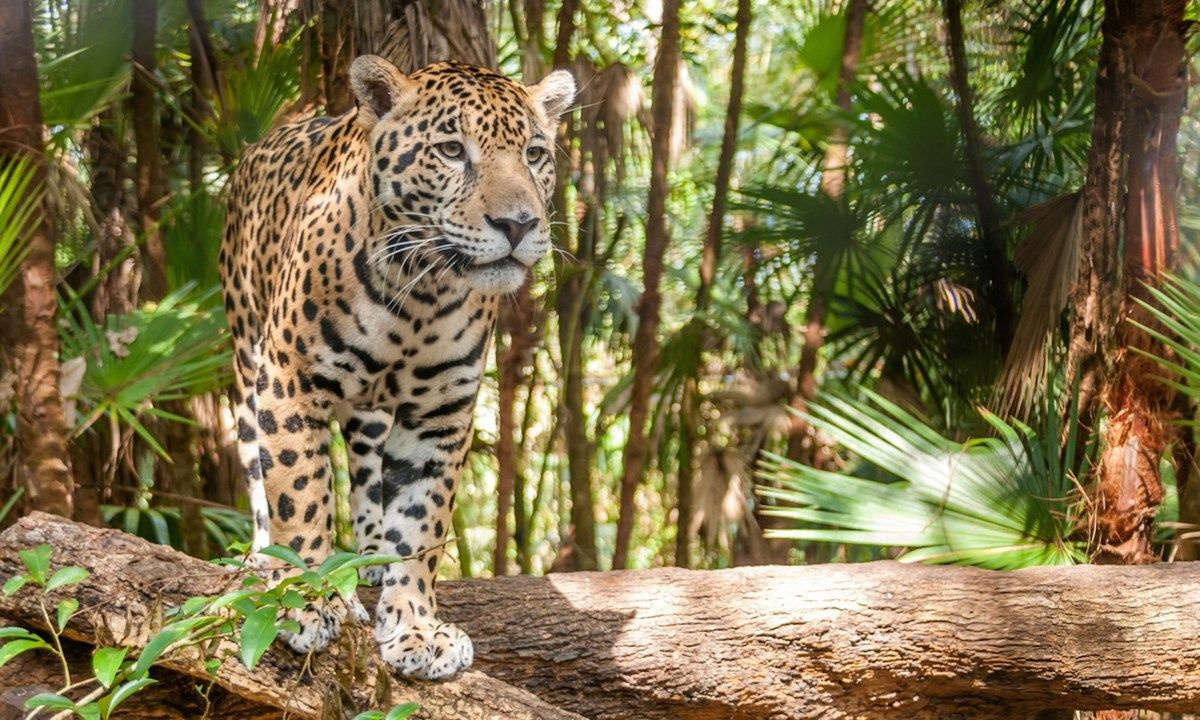 test Twitter Media - Get Closer to Nature in These Wildlife Hotspots | Belize's 7 Greatest Wildlife Experiences, On Land and Sea | Wanderlust https://t.co/ayXQFLSJNn https://t.co/8YDA3YEOxR