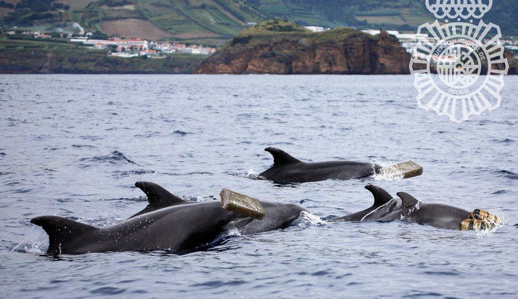 La inteligencia de los delfines les lleva a vender a otras especies los fardos de cocaína que tiran los narcos al mar https://t.co/REfS0EWYye