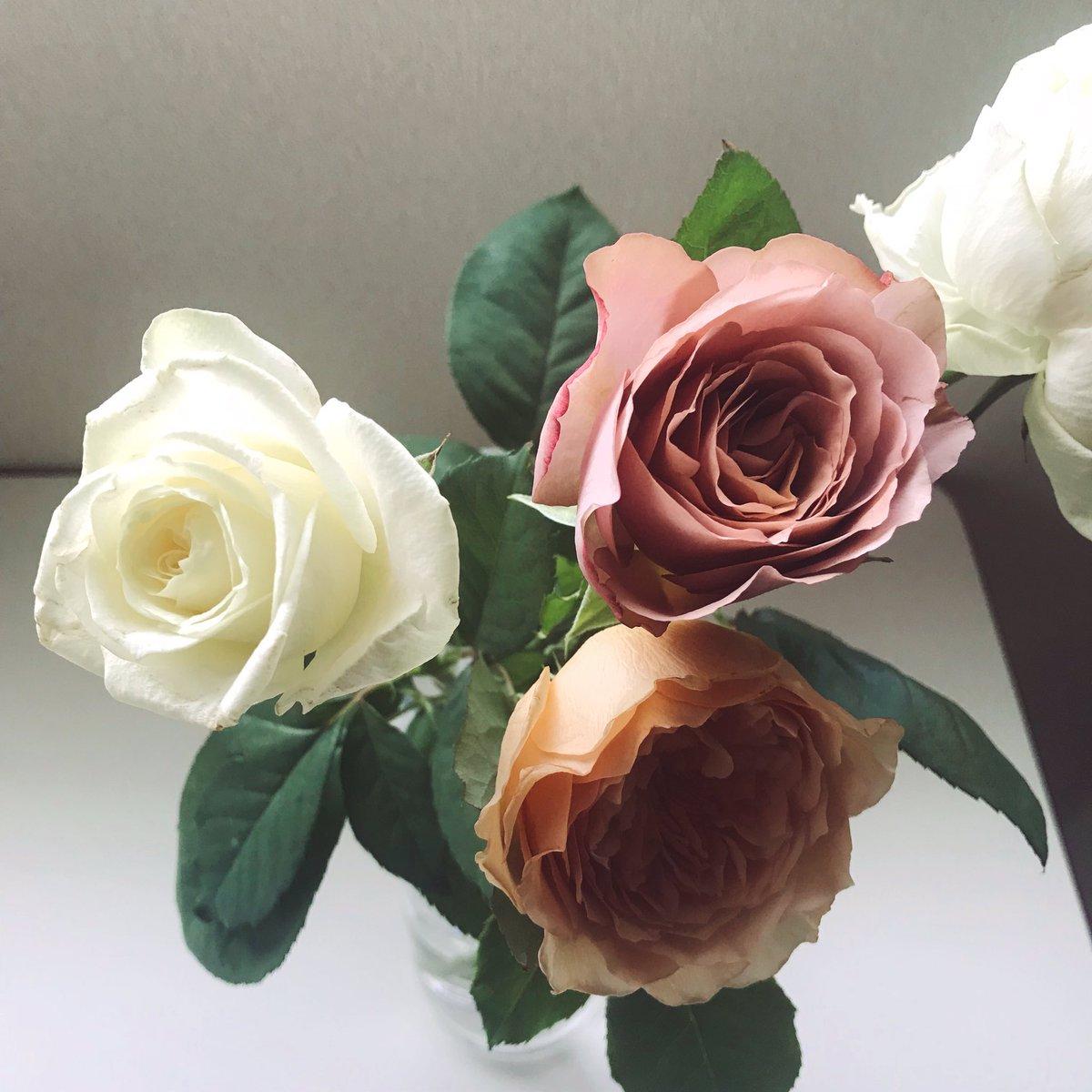 "mariekko on Twitter: ""四月五月に堂々と咲く、女王みたいな真紅の薔薇 ..."