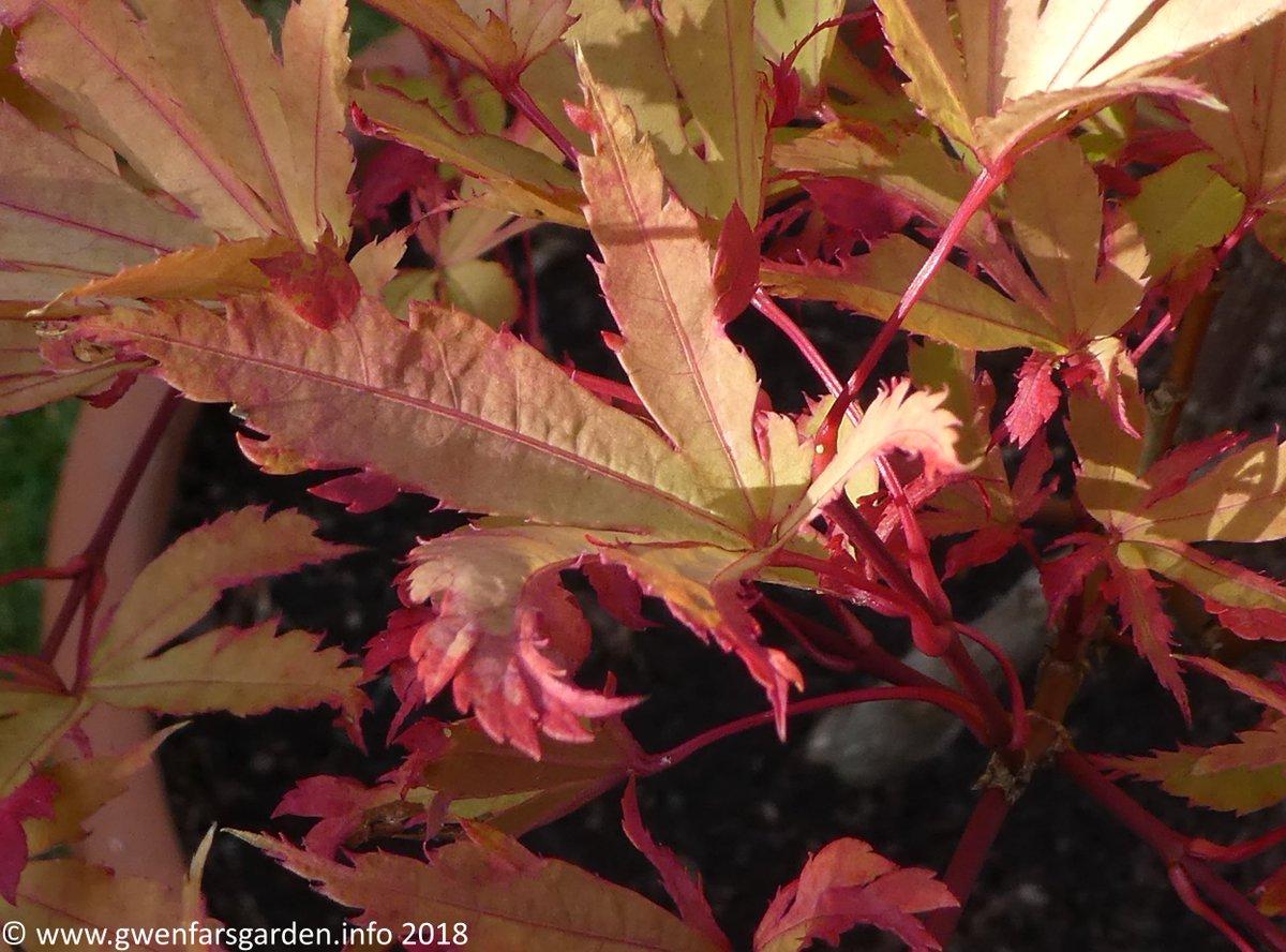 Gwenfarsgarden At Sunbeamcity On Twitter Autumn Means