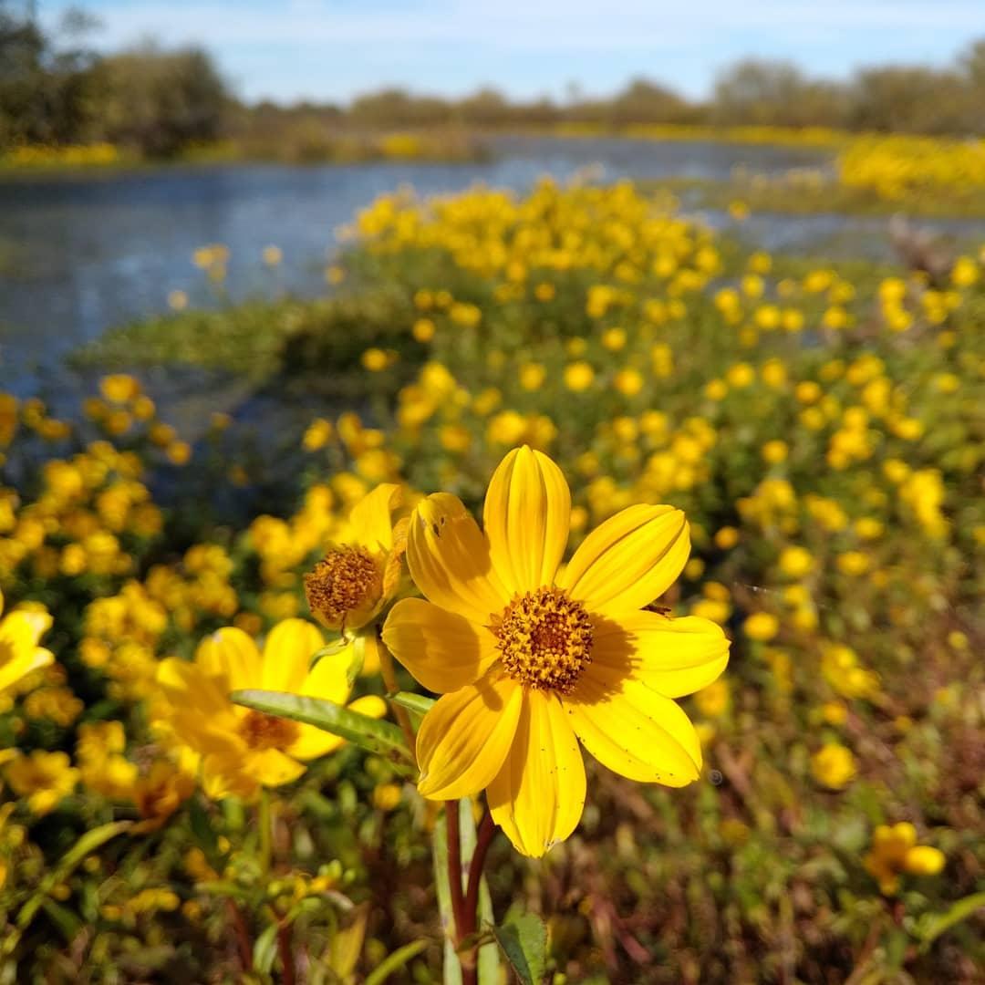 @UAEX_edu @AgWriterArk #WildFlowers #Sunflower #Aster  #Reservoirpic.twitter.com/KvBnqQfFtY