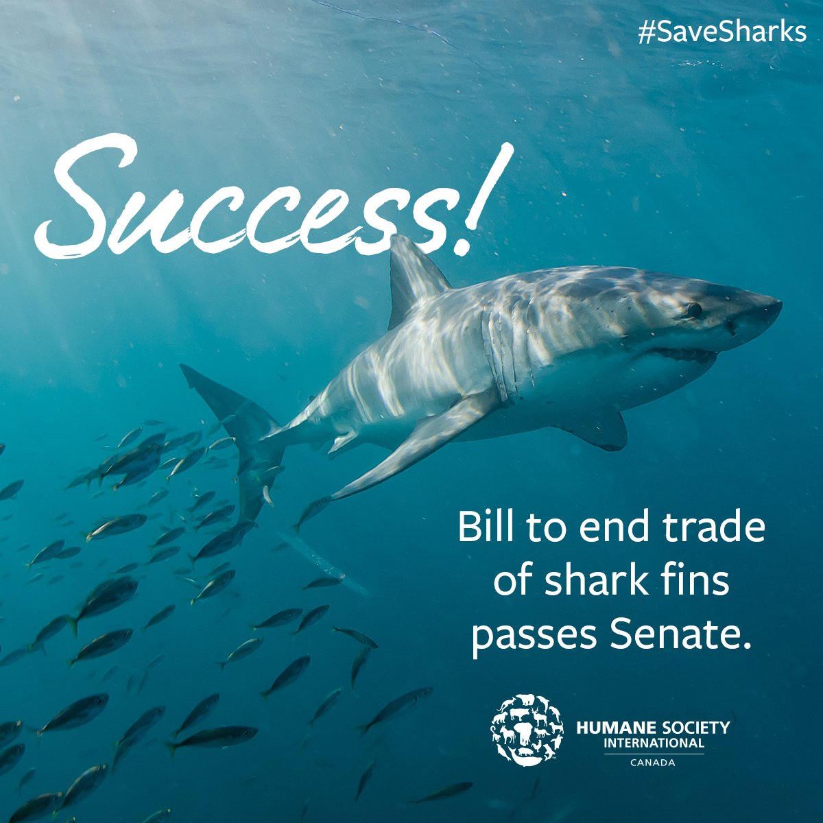 BREAKING: After years of campaigning on shark protection by #HSICanada,  @teamsharkwater & our wildlife allies, #BillS238 to End Trade of  Shark Fins clears the Senate by overwhelming majority and now moves to the House of Commons. We're halfway there! #SaveSharks #FinFree pic.twitter.com/1aAm5unZiI