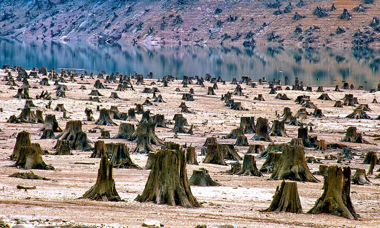 Надписью добрый, картинки вырубка лесов экологическая проблема