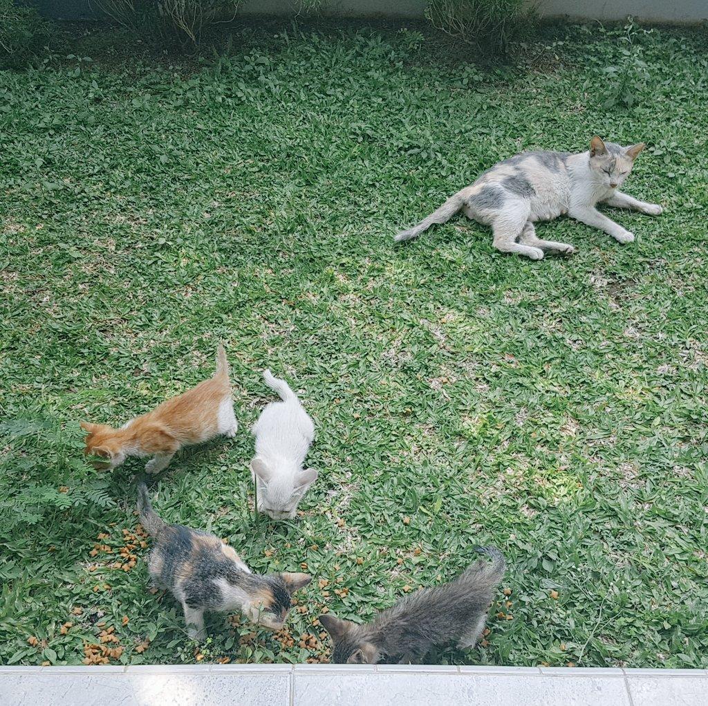 Nama Kucing C 81021 Nama Untuk Kucing Comel Lucu Dan Unik