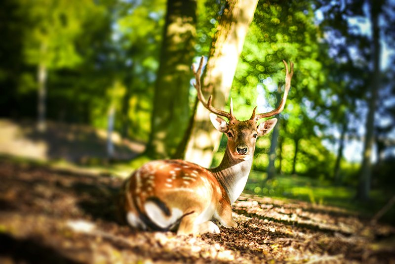 Deer in the forest. facebook.com/polarpx/ #deer #wildlife #nature #animals #photography #photographer