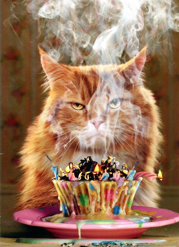 Прикольная картинки кошек с днем рождения