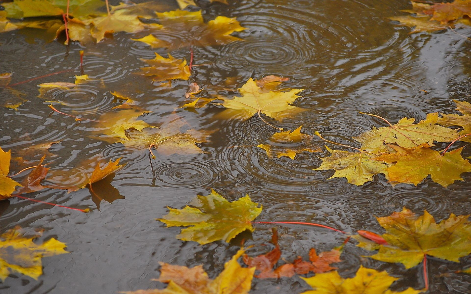 Осенние картинки с дождем красивые