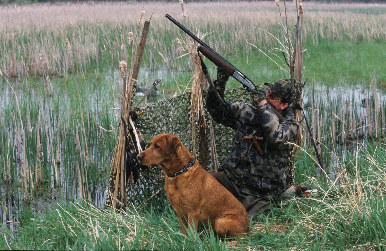 или фото картинок про охоту пинетки, представленные фото