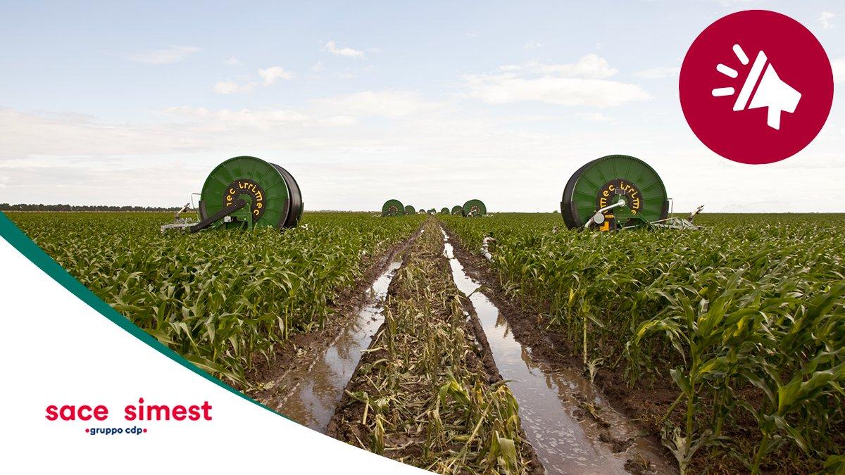 Una pioggia di opportunità per Irrimec in America Latina! Con SACE SIMEST l'azienda leader nella progettazione e realizzazione di sistemi di irrigazione per il settore agricolo, ha assicurato online le sue #esportazioni in #Cile, #Bolivia e #Messico. 👉🏼http://bit.ly/SACE-Irrimec