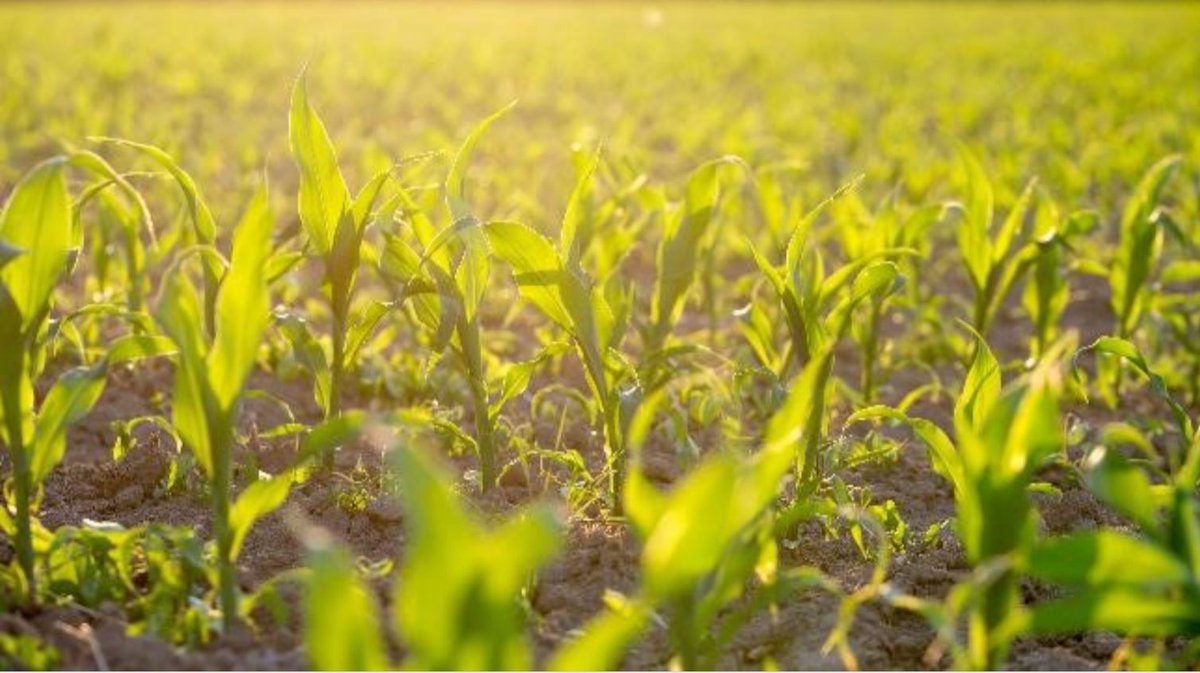 Crop Vitality On Twitter What Are You Doing Now To Ensure A