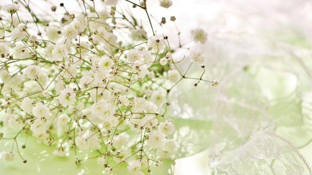 【カスミソウの花言葉】  『純潔』『清らかな心』『親切』『無垢の愛』『幸福』  他の花の添えものになりがちなカスミソウですが、最近は人気復活中。カスミソウだけをぎゅっと束ねても可愛いです。  染めた色つきのものも人気。 https://t.co/F9wJTDGsTs