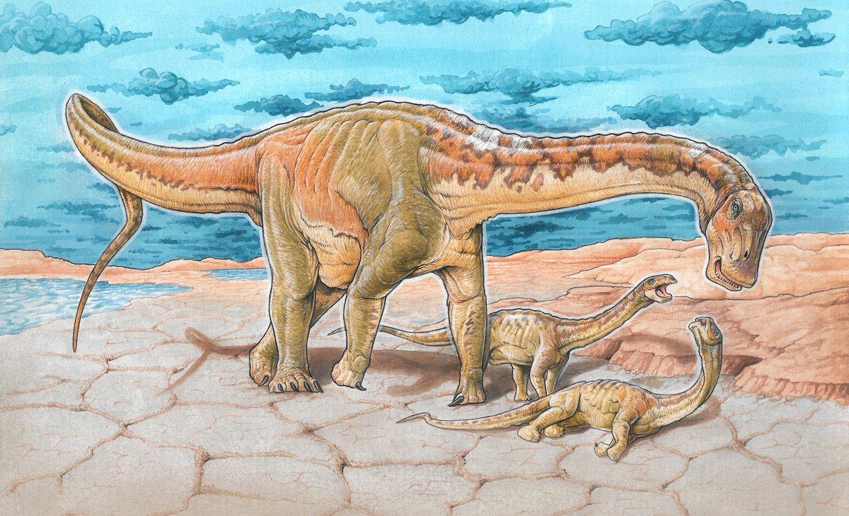 Une espèce de dinosaure géant découverte en Argentine Dq_q-8IWwAAOXhj