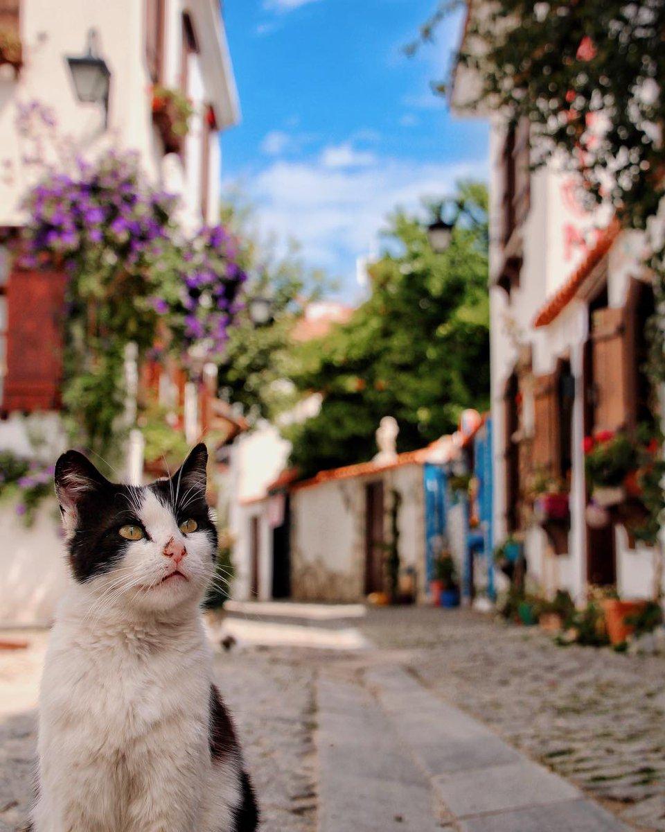 Go Turkey On Twitter Man I Could Wander These Charming Streets All Day Long Izmir Sigacik Frht Idog Ig Turkey Homeof Cats