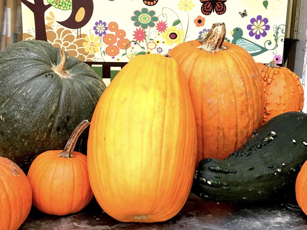 A Grouping Of Pumpkins