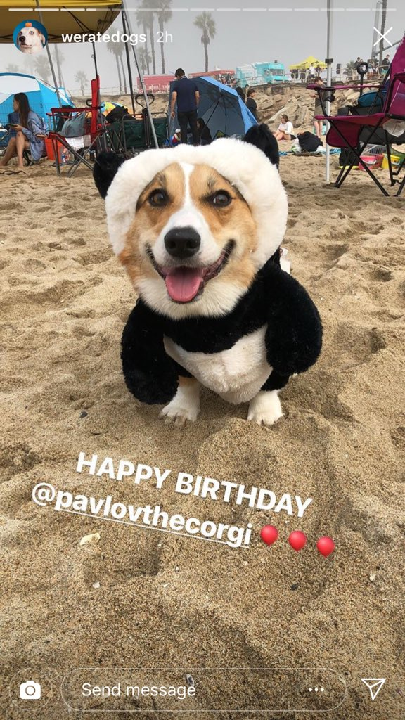 Must-see TV this weekend: The @dog_rates Corgi Beach Day Instagram and Snapchat stories