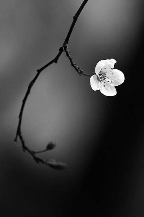 لا تجبروا أحدًا على اعتناق أرواحكم، فالحب مثل الدين لا إكراه فيه... @RumiArb