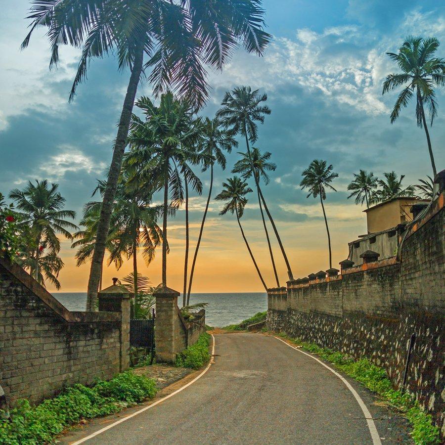 керала индия фото туристов растение