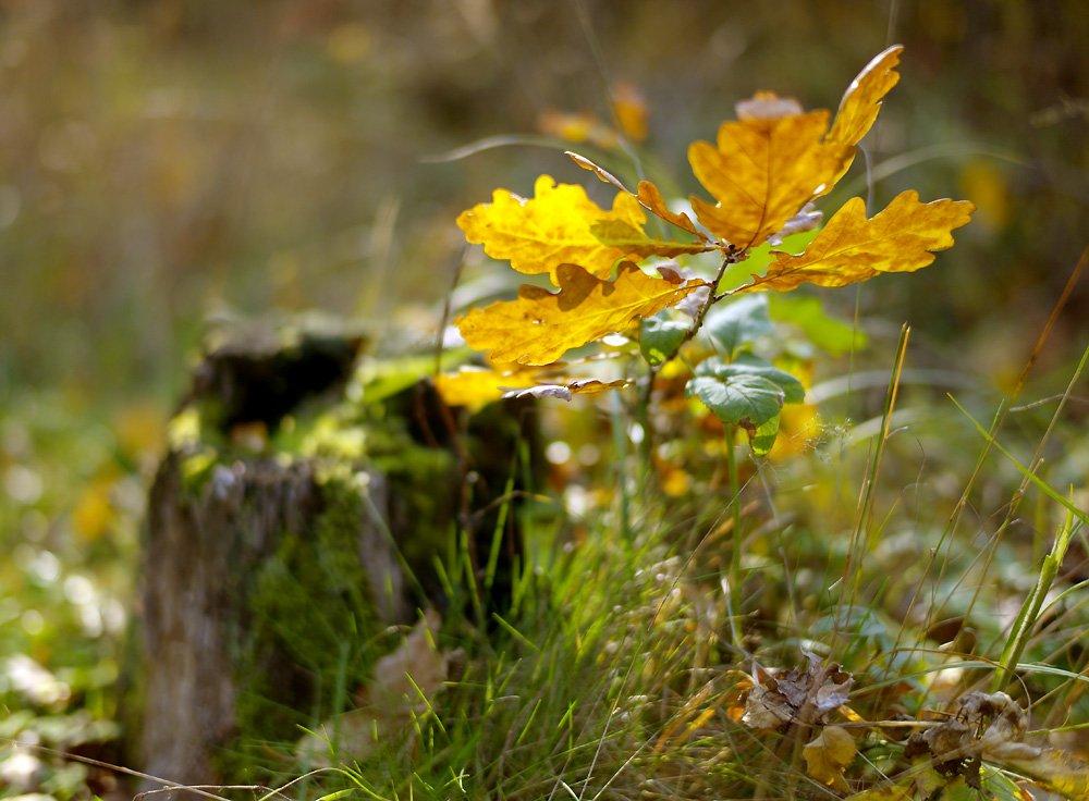 Картинки осень бабье лето красивые