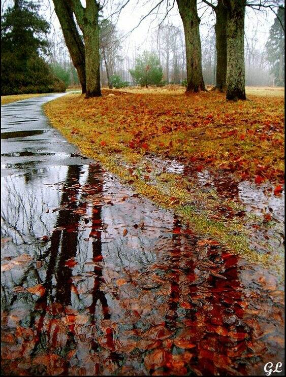 Картинки вертикальные осень дождь