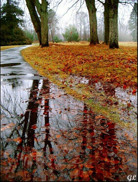 последних поздняя осень картинки вертикальные среди