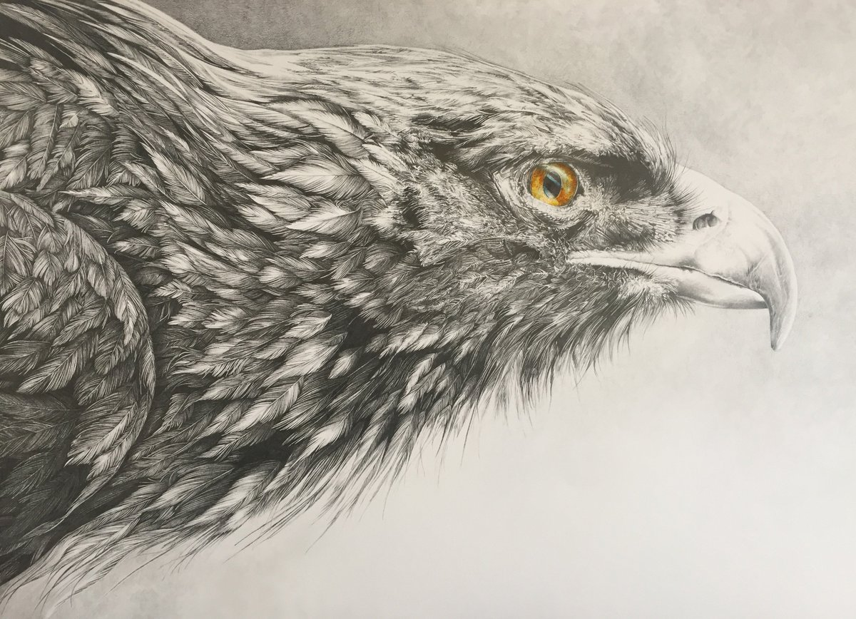 Bonnie helen hawkins on twitter golden eagle pencil drawing will