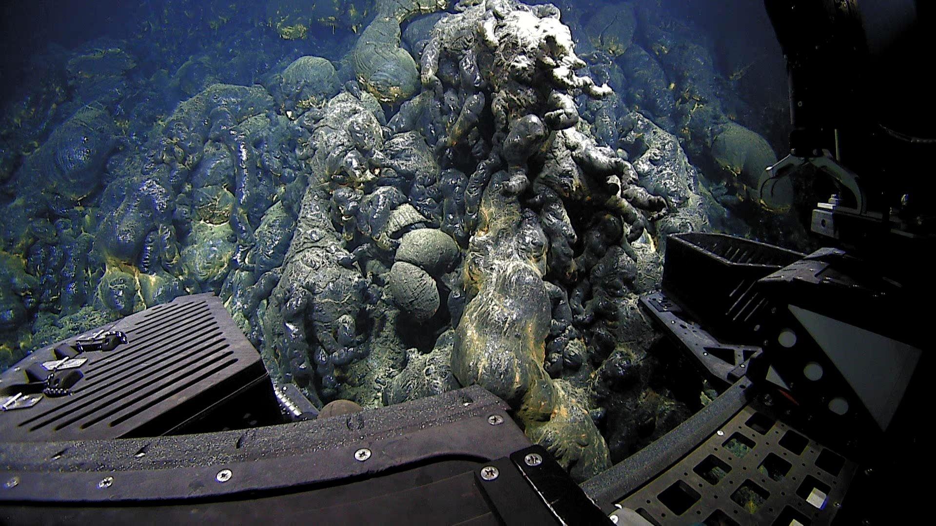 что находится на самом дне океана фото котлеты, отбивные, копченые
