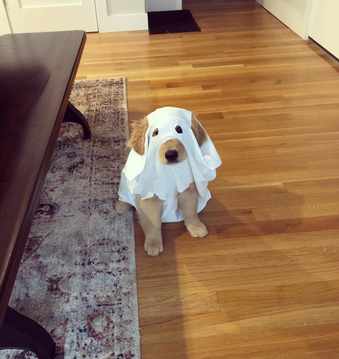 My goodness. Please don't send in ghosts. They are very frightening. We only rate dogs. Thank you... 12/10