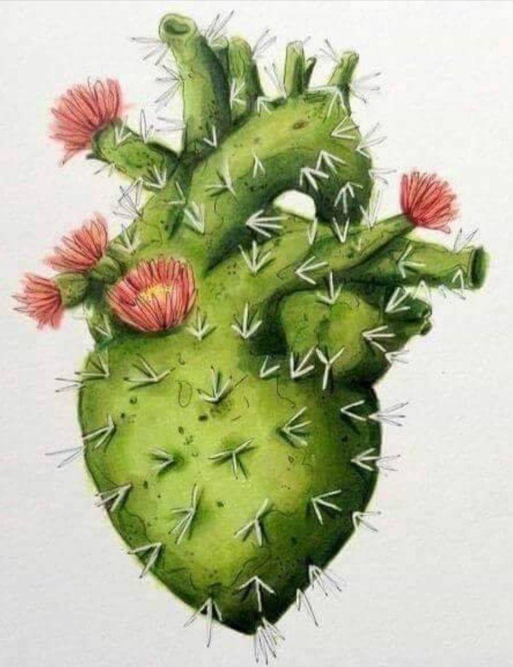 Juliana A Twitter Hay Que Ser Como Un Cactus Adaptarse A Cualquier Momento Tiempo O Circunstancia Ser Fuerte Y Aún Así Nunca Olvidarse De Florecer Https T Co Kxkpmqbhch