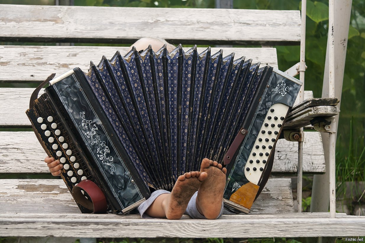 Картинки с аккордеоном прикольные, цветы красивые пионы