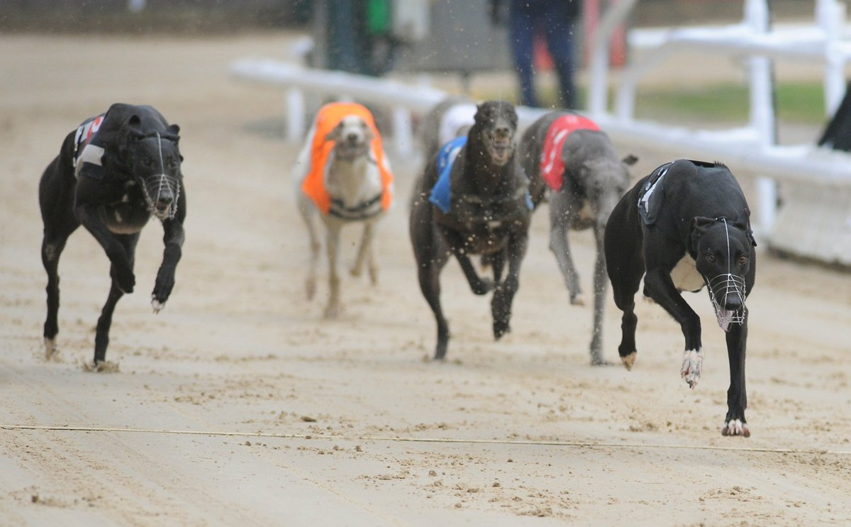 RPGreyhounds On Twitter Find The Best Bets For Tonights Cards In