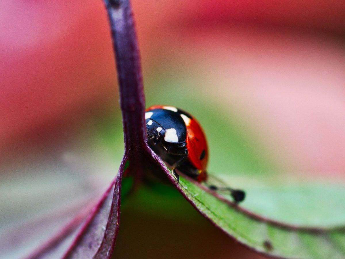 Ladybug 🐞🐞🐞 #fsprintmonday #sharemondays2018 #WexMondays