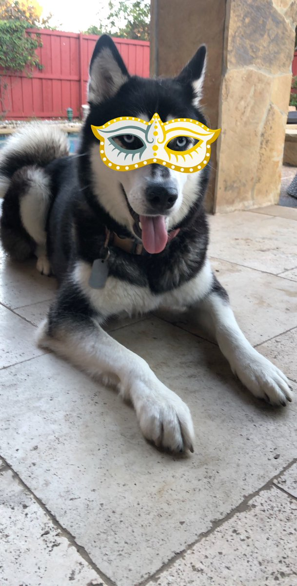 Ey pals! Let us remember &amp; Celebrate our Amigos Los Gatos  #catsday #celebratecatsday #InternationalCatDay #DogsofTwitter #Huskies #siberianhusky #siberianhuskiesofinstagram #dogscelebration #DogsofTwittter #doglovers #dogslove #mydogiscutest #dogsarelove #dogsarefamily<br>http://pic.twitter.com/BgXctPKi3W