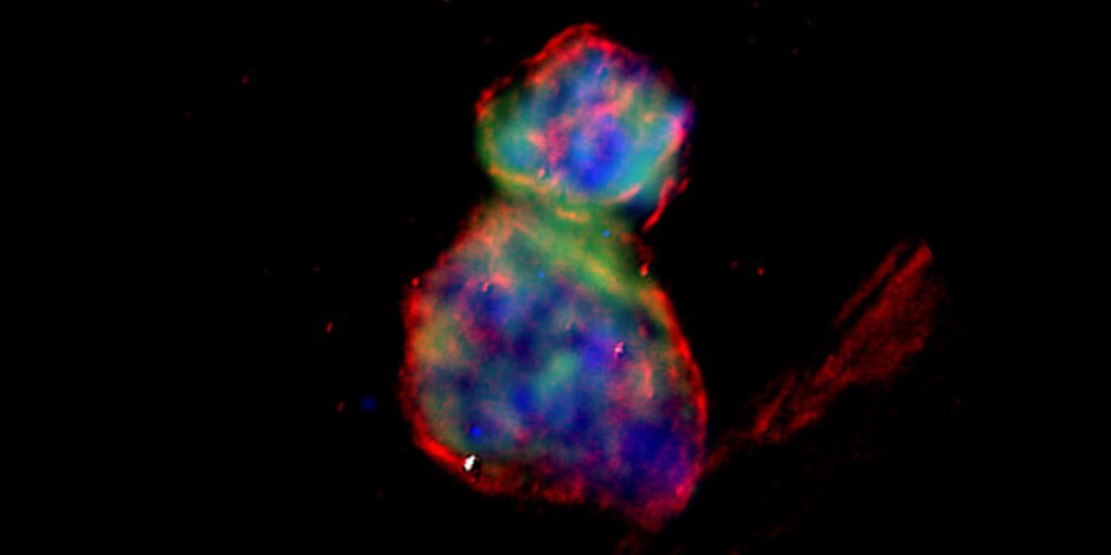 This cat-shaped image is actually the remains of 2 exploded stars! Roughly 160,000 light years from Earth in the Large Magellanic Cloud, this chance alignment of supernova remnants is pawsitively purrfect on #NationalCatDay!  https://t.co/PP4Fw8u3ya