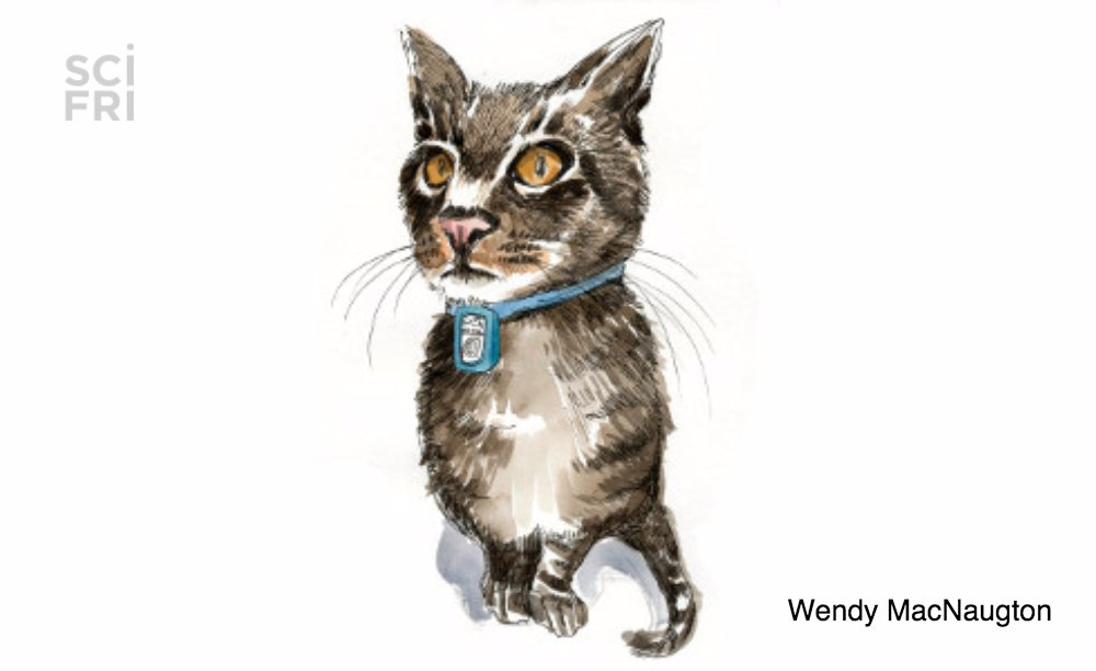 A couple&#39;s cat ran away.  When the cat came back, &quot;he was fine, but also he had gotten fat.&quot;  To find out where their cat went, they launched Operation Chasing Tibby #InternationalCatDay  http:// scifri.me/s2  &nbsp;  <br>http://pic.twitter.com/rl1KSEb6R0