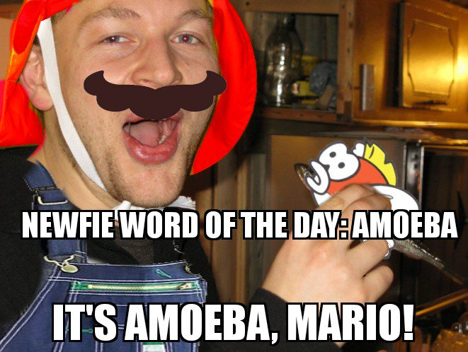 Cape Shore Memes On Twitter Hey Newfie Word Of The Day Guy What Are You Dressed Up As For Halloween