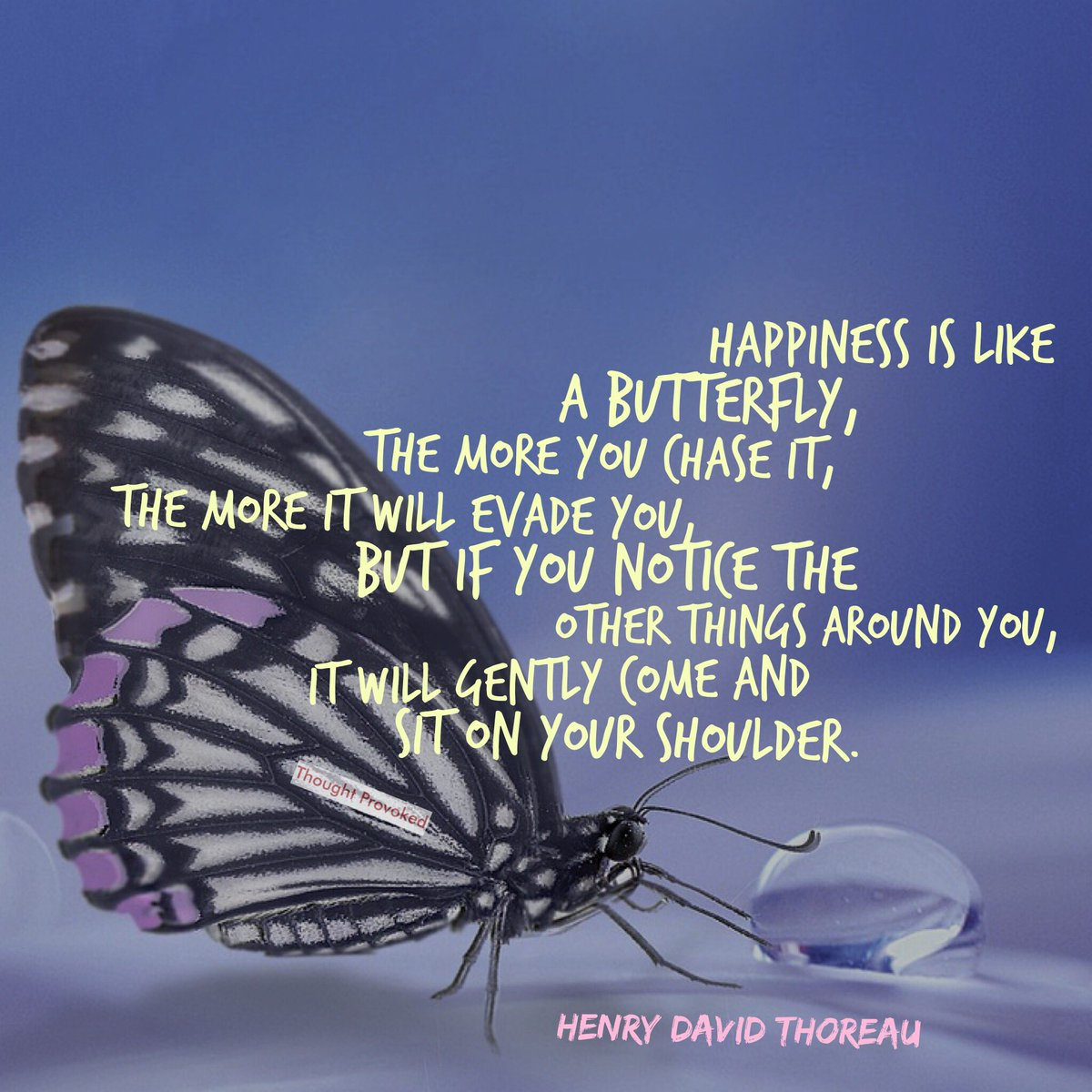 Thought Provokeds Tweet Happiness Is Like A Butterfly The More