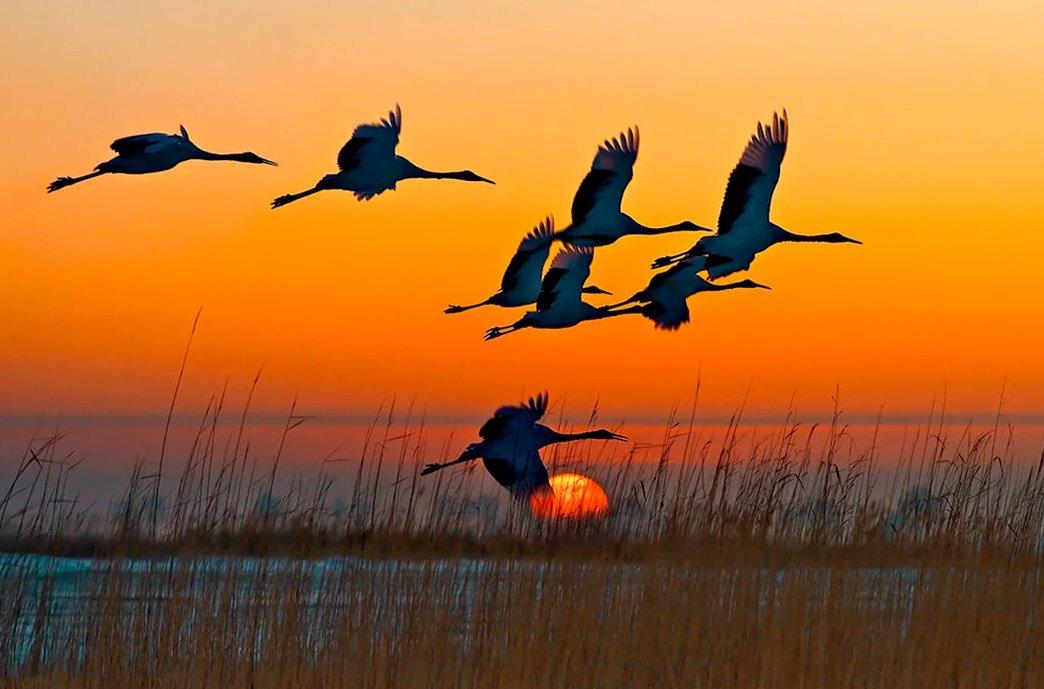 Анимированные картинки птицы улетают на юг, другу для детей