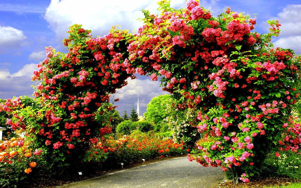 Анимационная картинка прекрасная роза вам