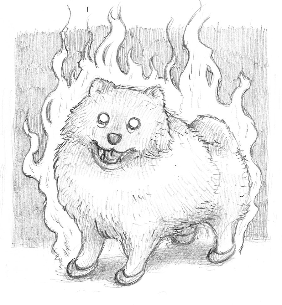 Sergio On Twitter I Want To Build A Rep As The Evil Pomeranian Guy