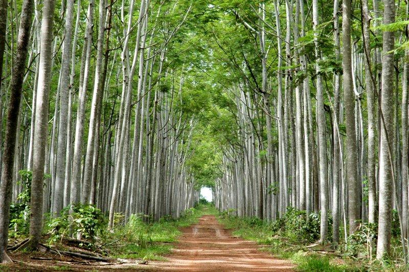 Resultado de imagem para reflorestamento