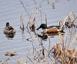 Hunting the Grand River for ducks? Could be a challenge. More in today's Wisconsin @OutdoorNews podcast ... Foto