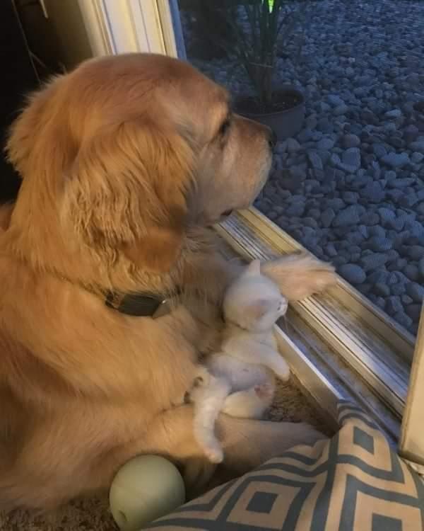 拾われてきた子猫と先住犬との物語。