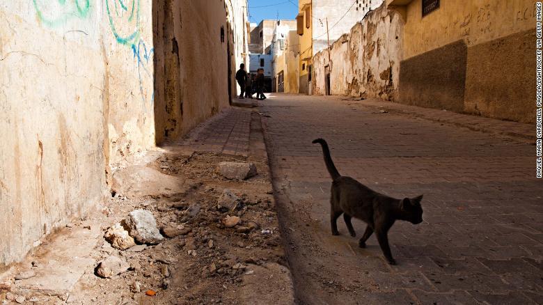 Hombre muere de rabia después de que un gato lo mordiera en Marruecos https://t.co/5lv8vw74kz https://t.co/a6EXrZuOkc